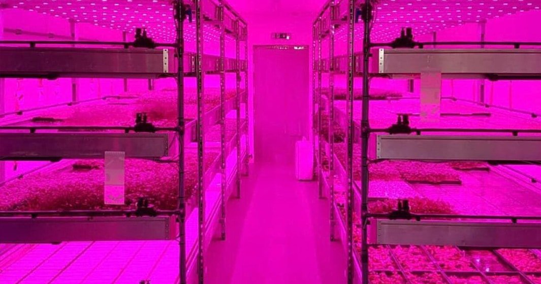 Vertical Farming with MiniCrops